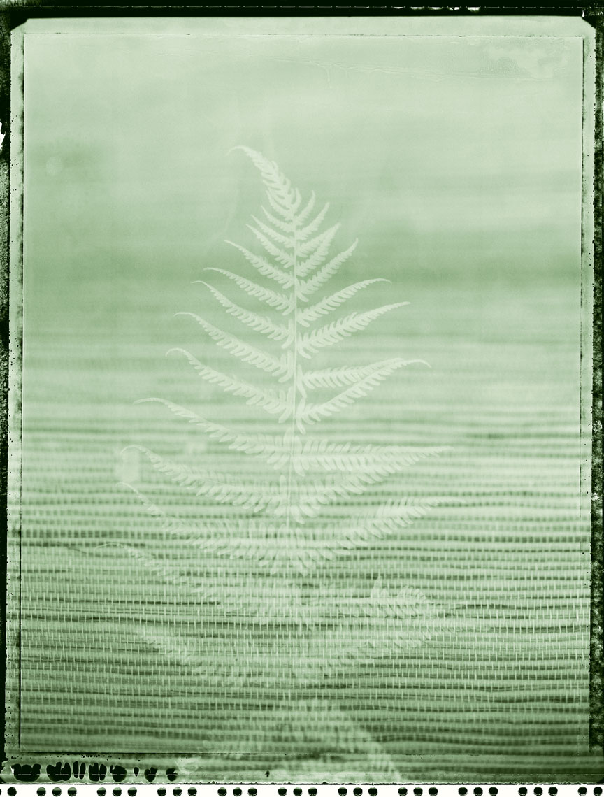 Fern_Raffia_Sharp_Green_4sl