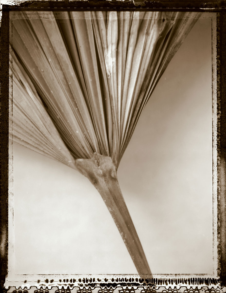 Palm_Leaf_Stem_4sl